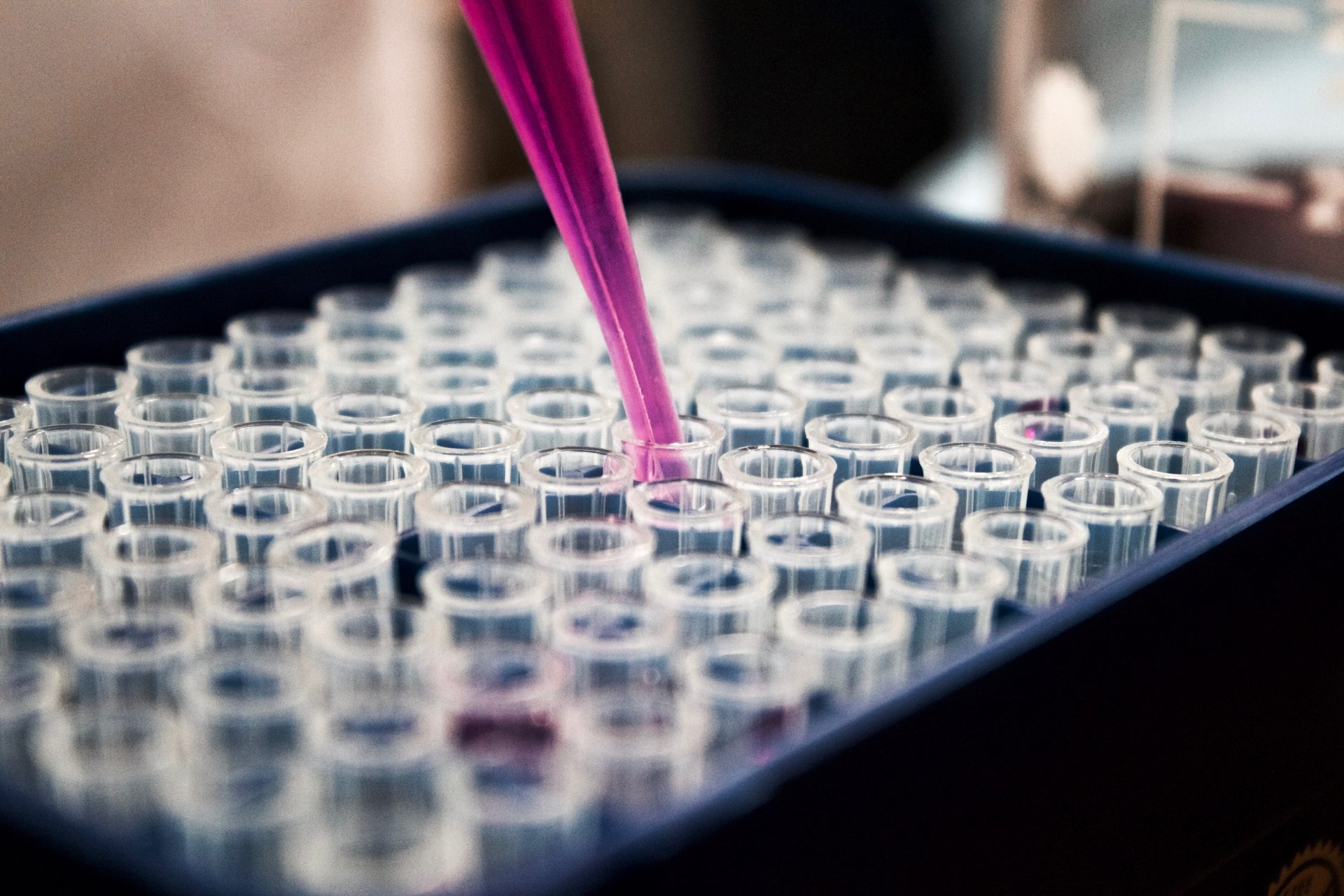 Pink liquid being syringed into a rack of test tubes